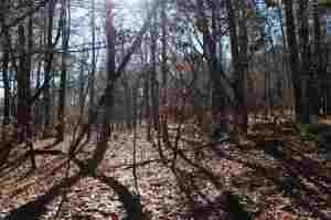 Land/Acreage - Southern Pines, NC (photo 3)
