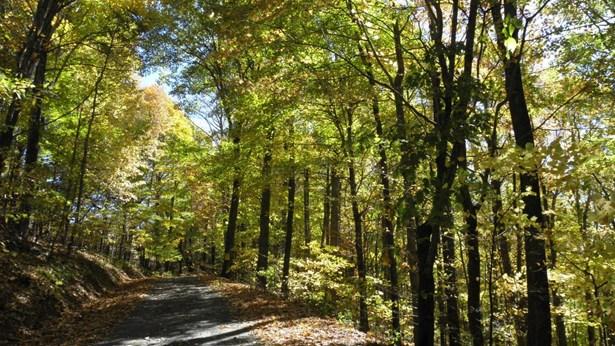 926 Chestnut Farms Road, West Jefferson, NC - USA (photo 2)
