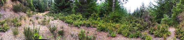 6 Ne Aquila Ridge Rd, Tahuya, WA - USA (photo 2)