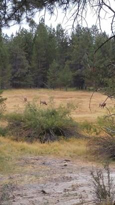 15782 Jackpine Road, La Pine, OR - USA (photo 4)