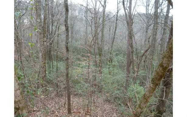 Vacant Lot - Marble, NC (photo 3)