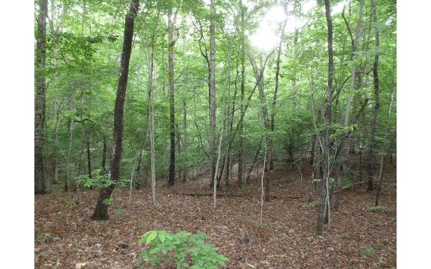 Vacant Lot - Blairsville, GA (photo 1)