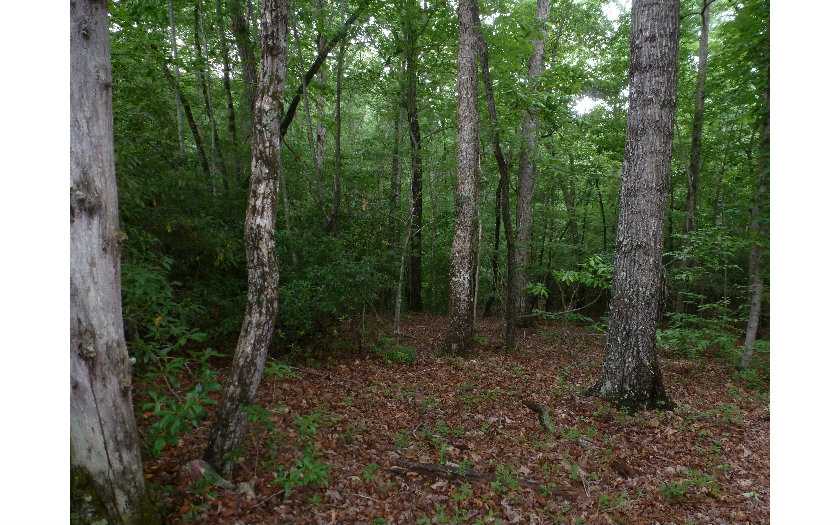 Vacant Lot - Blairsville, GA (photo 3)