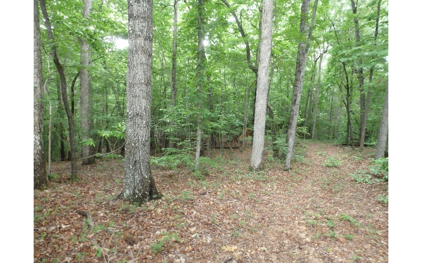 Vacant Lot - Blairsville, GA (photo 4)