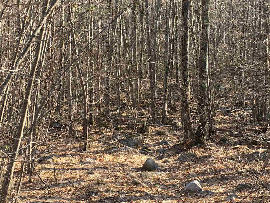 Land - New Durham, NH (photo 3)
