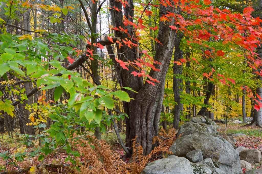 Land - Deering, NH (photo 1)