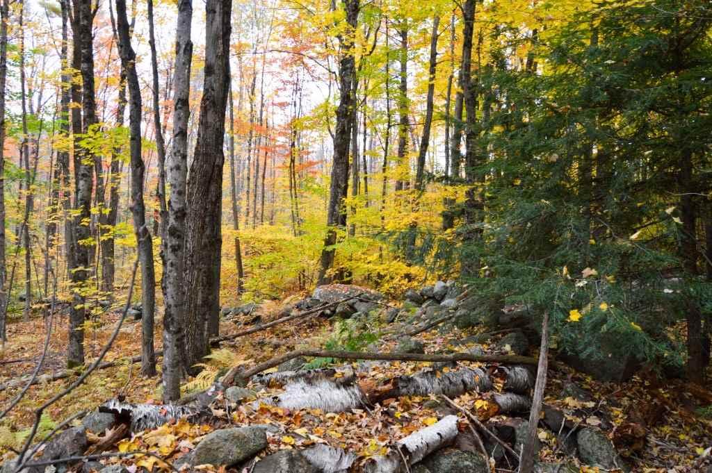Land - Deering, NH (photo 2)