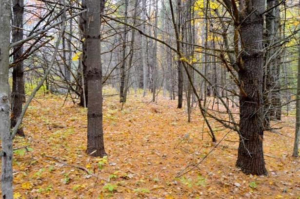 Land - Deering, NH (photo 3)