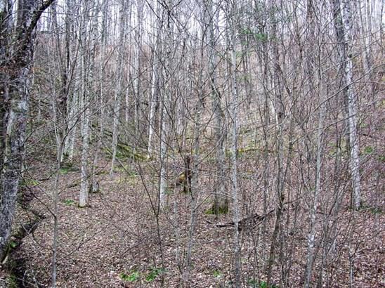Subdivision - Zionville, NC (photo 3)