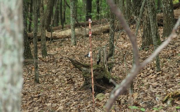 Lt 13 Picklesimer Mountain, Morganton, GA - USA (photo 4)