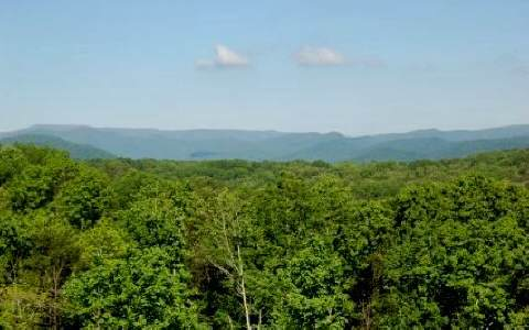114 Cohutta Overlook, Blue Ridge, GA - USA (photo 1)