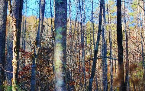 Overlook/maxwell, Blue Ridge, GA - USA (photo 3)