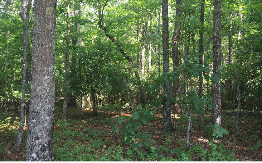My Forest Tr, Morganton, GA - USA (photo 4)