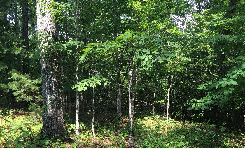 My Forest Tr, Morganton, GA - USA (photo 5)