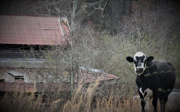 520 Bearden/chestnut H, Blue Ridge, GA - USA (photo 5)