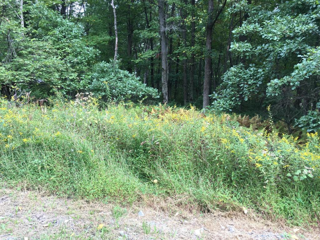 Raw Land - Greeley, PA (photo 4)