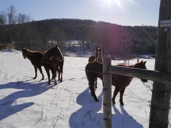 Land - Equinunk, PA (photo 4)