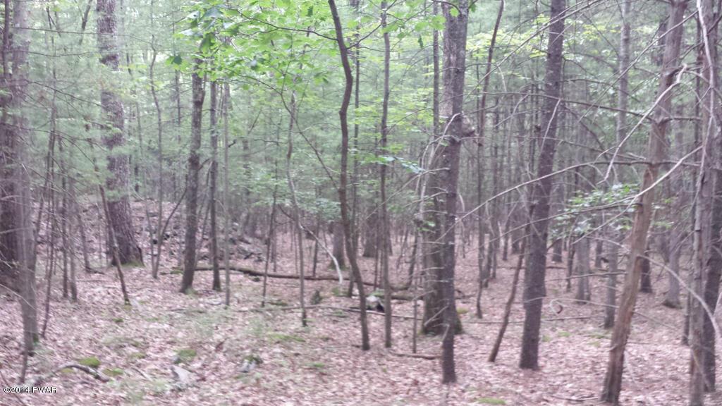 Raw Land - Shohola, PA (photo 1)