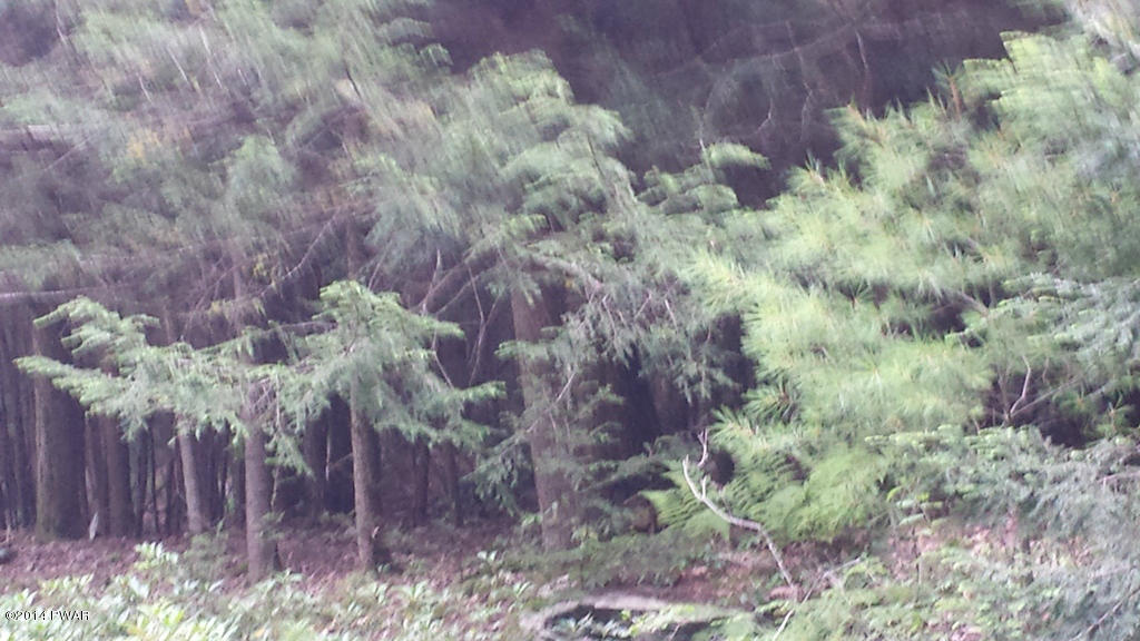 Raw Land - Shohola, PA (photo 3)