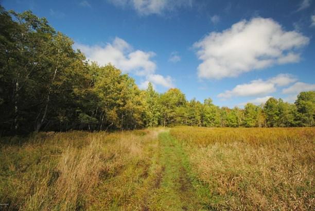 Raw Land - Forest City, PA (photo 4)