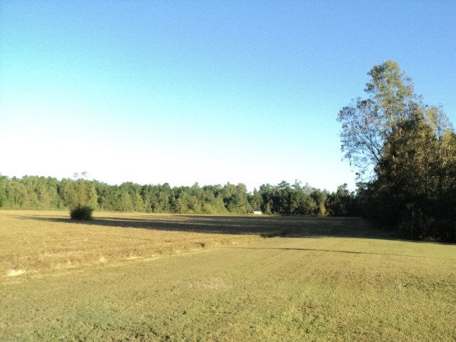 15 Acres N Mashon Rd, Independence, LA - USA (photo 1)