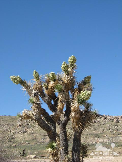 Lots and Land - Joshua Tree, CA (photo 1)