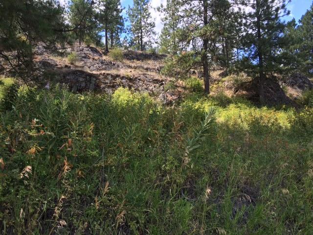 1750 Inchelium Hwy, Inchelium, WA - USA (photo 2)