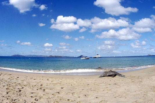 Nail Bay - VGB (photo 3)
