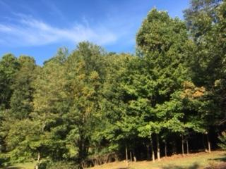 Land (Acreage), Lots/Land/Farm - Bent Mountain, VA (photo 1)