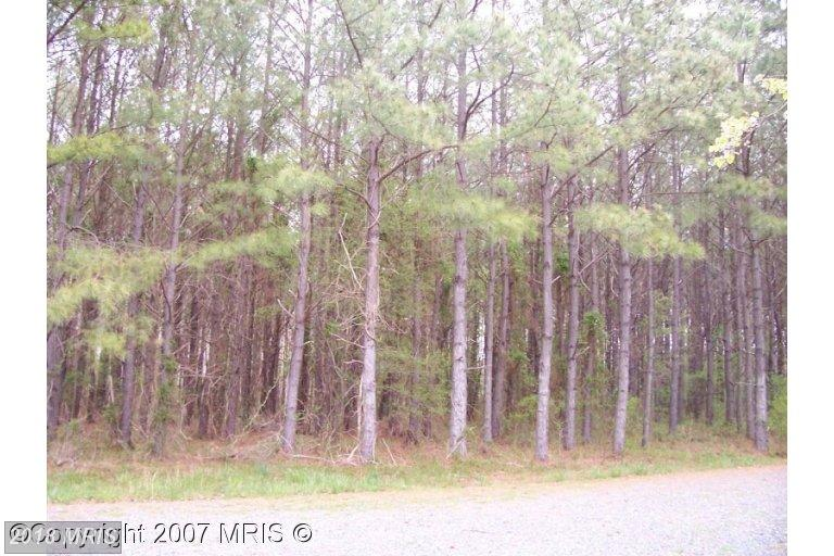 Lot-Land - TRAPPE, MD (photo 1)
