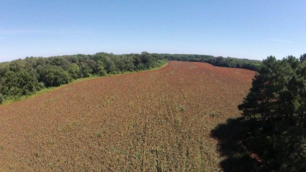 Land - Parksley, VA (photo 4)