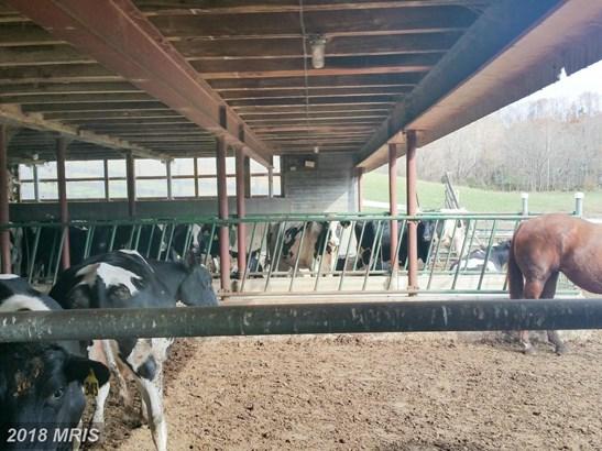 Farm House, Detached - BIG POOL, MD (photo 5)