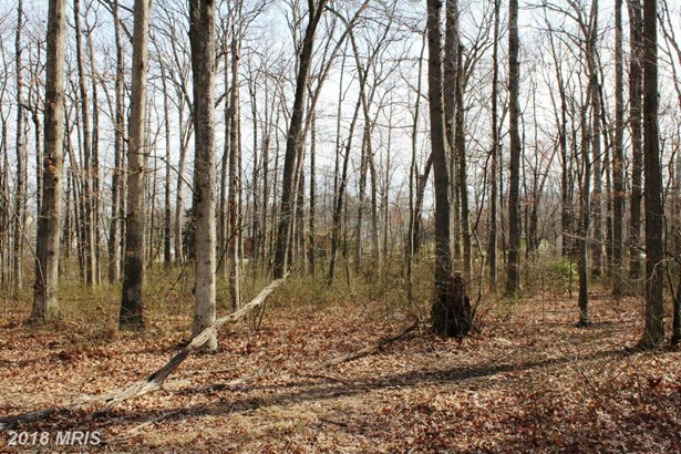 Lot-Land - MIDDLE RIVER, MD (photo 1)