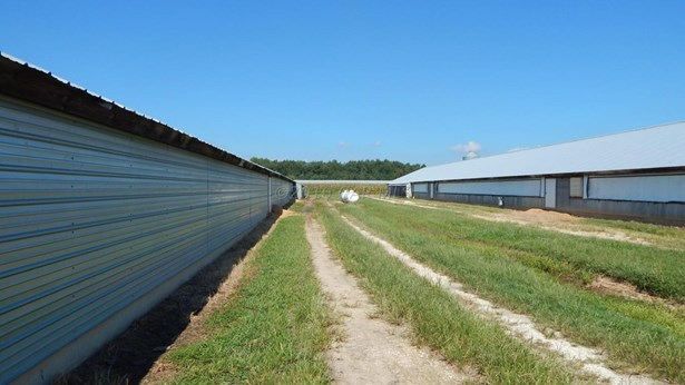 Farms - Pocomoke City, MD (photo 2)