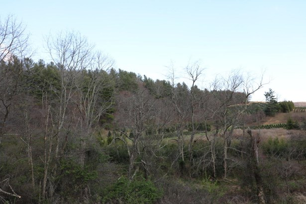 Tree Farm, Lots/Land/Farm - Copper Hill, VA (photo 1)
