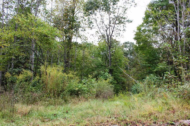 Land (Acreage), Lots/Land/Farm - Ferrum, VA (photo 3)