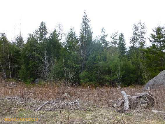 Cross Property - Amherst, ME (photo 3)