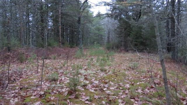 Cross Property - Sullivan, ME (photo 4)