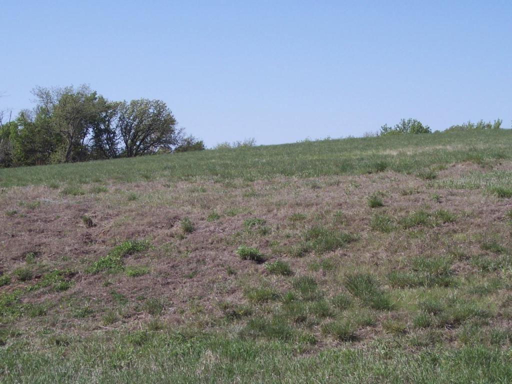 Land - MISSOURI VALLEY, IA (photo 1)