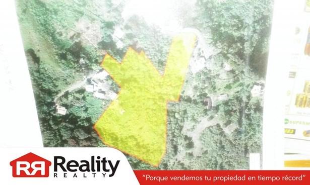 Cidra - PRI (photo 2)