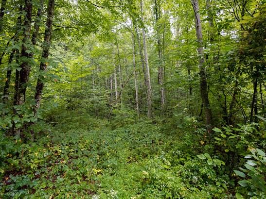 37 +/- Acres Shelton Branch Road, Barnardsville, NC - USA (photo 4)