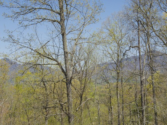 257  Peaceful Lane, Clyde, NC - USA (photo 5)