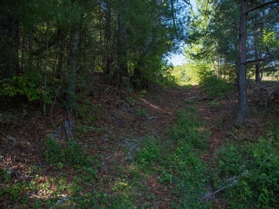 55.89+/- Acres Bearwallow Road, Fletcher, NC - USA (photo 5)