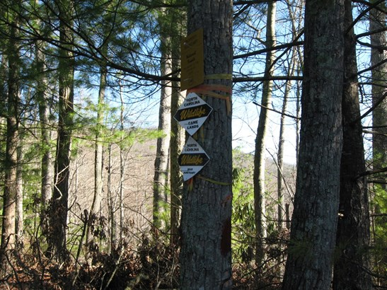 629 Pine Cone Trail, Marshall, NC - USA (photo 5)