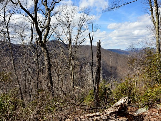 43  Turkey Trace Lane, Black Mountain, NC - USA (photo 2)