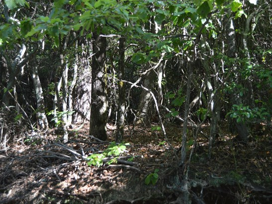 71 Acres  Locust Grove Road, Hendersonville, NC - USA (photo 4)