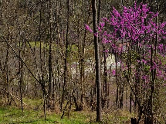 221  Starry Night Lane, Marshall, NC - USA (photo 4)