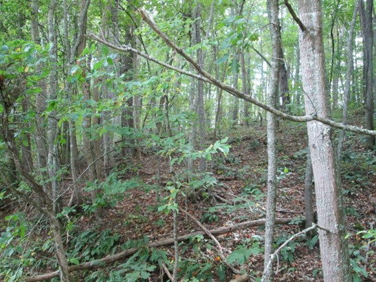 Lot #47  Woodhaven Road, Mars Hill, NC - USA (photo 4)