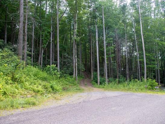 181.88 Ac  Bee Tree Road, Swannanoa, NC - USA (photo 5)
