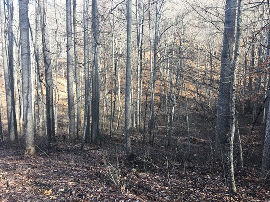 1124  Indian Creek Road, Burnsville, NC - USA (photo 5)